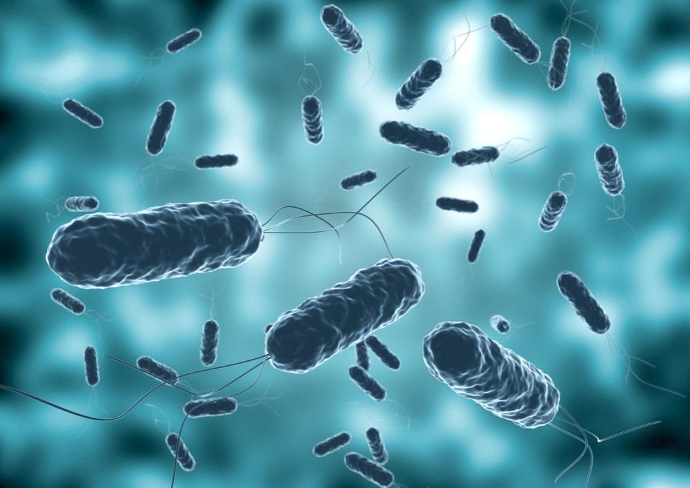 Cholera – objawy, diagnostyka, leczenie i profilaktyka